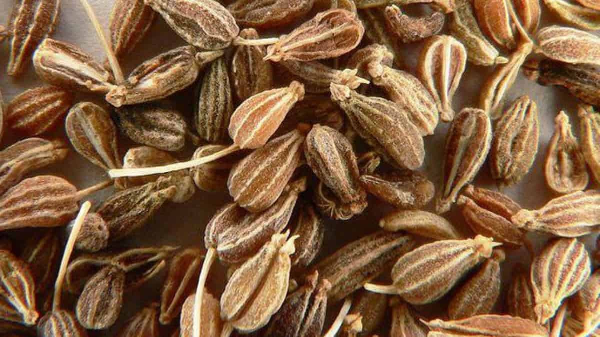 What is Anise Seed Spice?