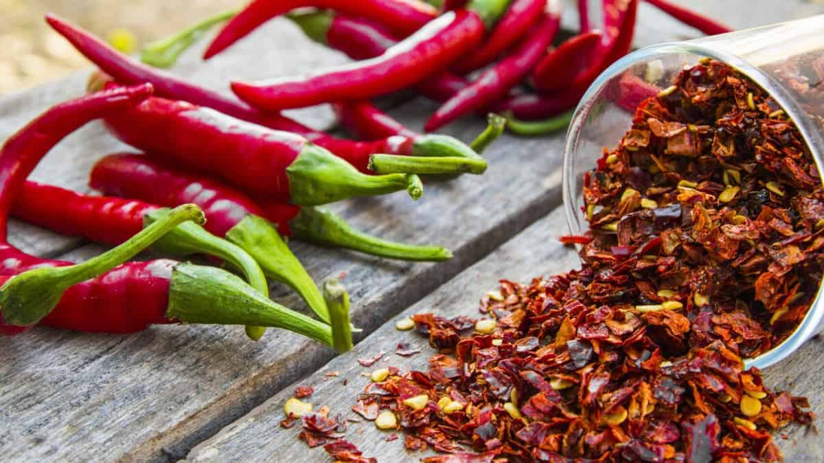 What is Chili Pepper?