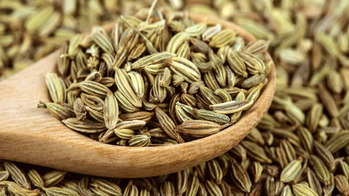What is Fennel Seed Spice?