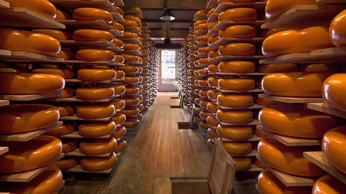 Cheese Facts: 5 Interesting Things About The 3rd Most Popular Dairy Food